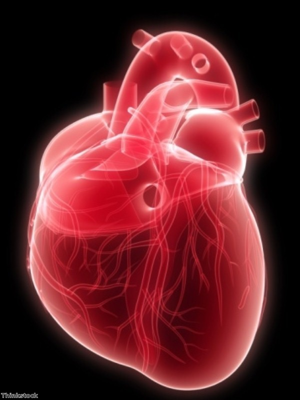Study casts doubt on heart stem cell regeneration