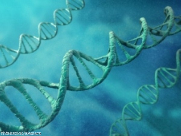 Research sheds light on DNA editing process
