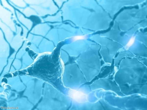 Researchers make neuron regeneration breakthrough